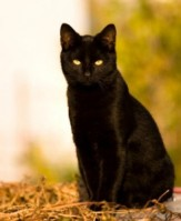 black-cats-superstition-245x300